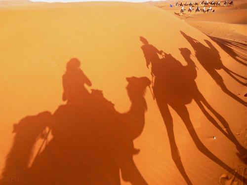 Shadows of camels on desert sand