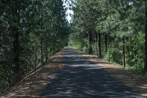 spokane outdoor trail spokanewa spokanewashington spokanecounty fishlaketrail