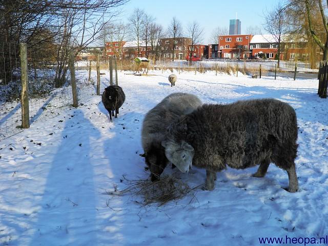 16-01-2013 Blokje wandelen 7.5 Km (6)