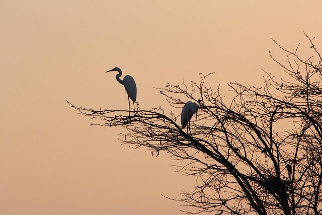 Ken river, India