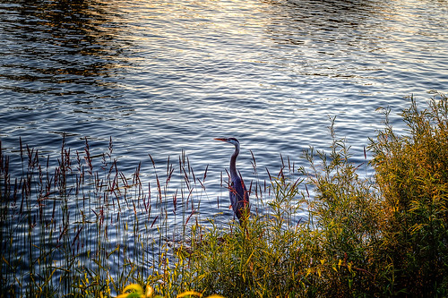 sunset lakeontario blueheron websterny irondequoitny irondequoitbayoutlet