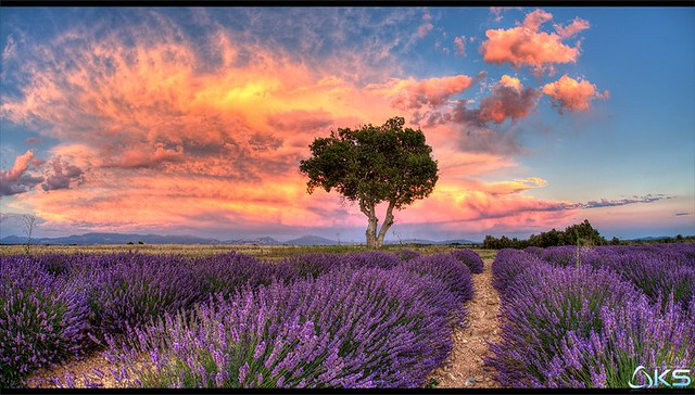 Dreaming of Provence II