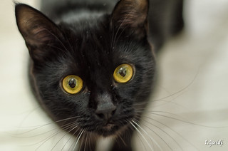 Cat Kichute   by I.Guidi