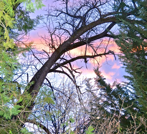 behind cellar door 2017 clouds hopkins plymouth sunset trees