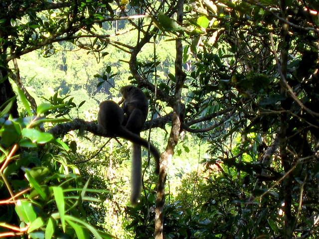 Madagascar2 - 035