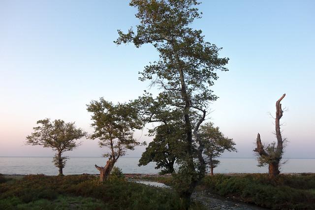 Pleine lune, arbres