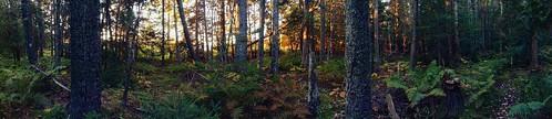 morning trees forest sunrise woods maine trail acadianationalpark blueherontrail oceansidemeadowsinn