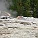 Catfish Geyser (Giant Group, Upper Geyser Basin, Yellowstone Hotspot Volcano, nw Wyoming, USA)