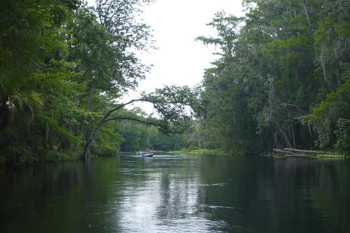 silversprings florida places kayaking ocala marioncounty silverriver otherkeywords silverriverstatepark