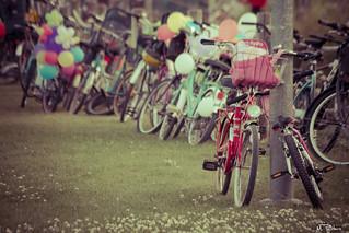 bicis, bicis y más bicis