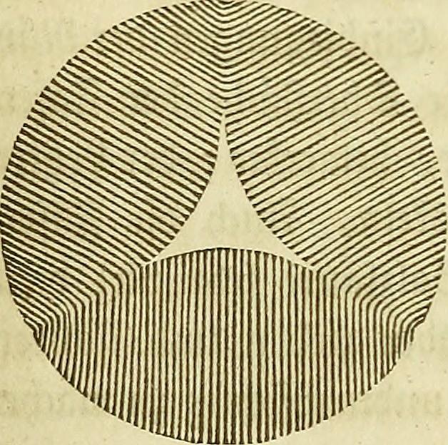 """Image from page 359 of """"Allgemeine Anatomie : Lehre von den Mischungs- und Formbestandtheilen des menschlichen Körpers"""" (1841)"""