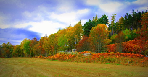 autumn trees sky nature grass canon eos scotland fields moray spey speyside knockando 60d thespeysideway