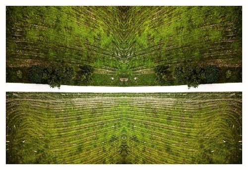 park trees sky kite newyork water grass barn landscape photography harbor state huntington jr kites lloyd kap dairy rivera kiteaerialphotography rigs mod1 nestor picavet kapshop caumsett rokakku nestordesigns nikoncoolpixa nestorriverajr jonesairfoilforce5