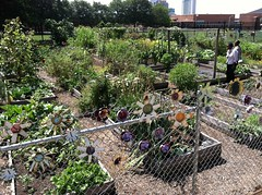 Eastside Community Garden Beds