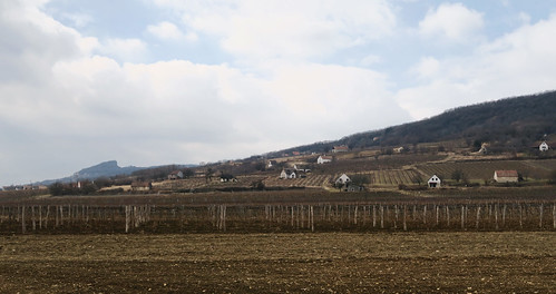 Small vineyards while rolling to Balaton | by najuste