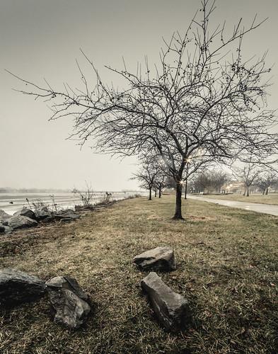 kantzler memorial arboretum baycity michigan midmichigan winter foggy fog mist light tree sidewalk river saginawriver grass rocks cold bare canoneos5dmarkiv