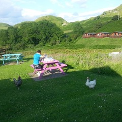 Oban campsite chickens joining us for dinner