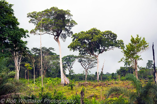 africa canon eos jungle westafrica 5d canoneos cameroon kribi mkiii littoral canoneos5d canonphotography robertwhittaker africaoverland canoneos5dmkiii sazzoo robwhittaker robwhittakerphotography sazzoocom cameroonphotography cameroonphotographs cameroonjungle