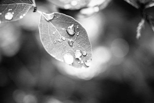 Drops   by Simson_Petrol