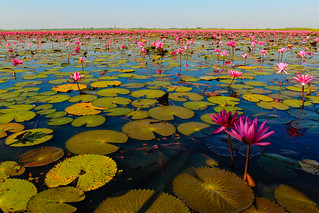 Lotus Sea | by Jostartheworld
