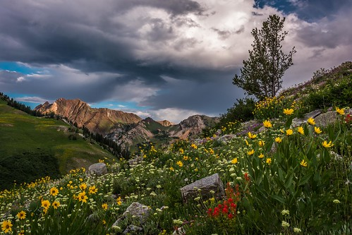 morning red mountains yellow sunrise landscape utah day cloudy alta wildflowers lonetree snowbird littlecottonwood albionbasin d7100