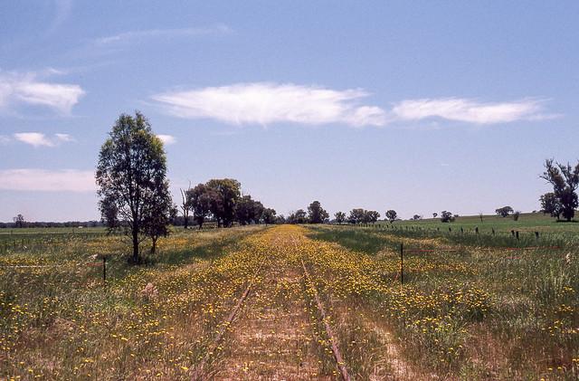 View towards Wahgunyah on closed branch.