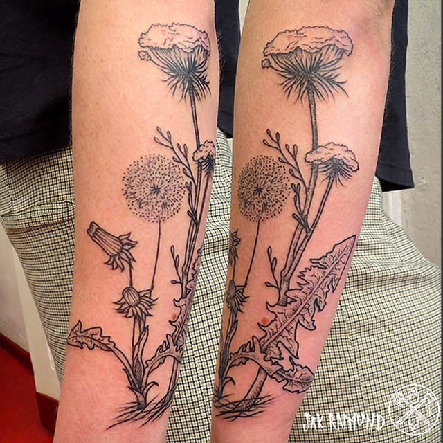 Some Dandelion And Queen Anne S Lace For Ashley This Was Flickr