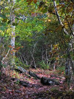 Fall Hike at Mount Jefferson