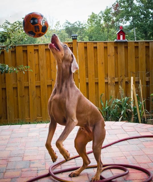 Roscoe and Ball