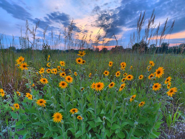 cobus creek county park hdr sunset