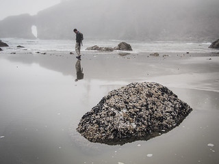 Olympic Peninsula - Second Beach | by carissapod :: fish parade
