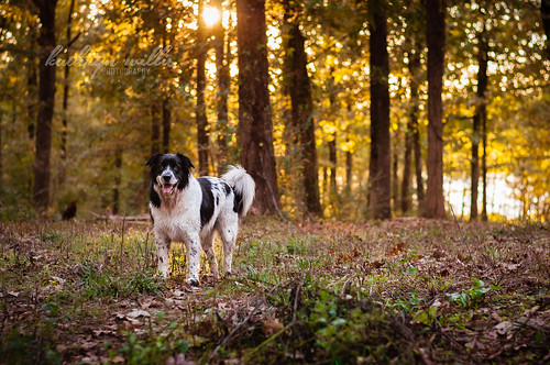 trees sunset dog forest blackwhite mutt canine spotted dogpark mixedbreed shelbyfarms happydog