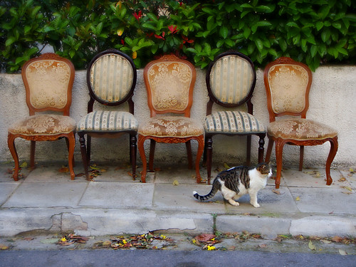 5 chairs and a cat   by Vassilis Online