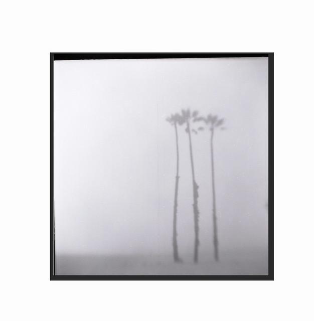 Seashore-palms on a foggy day