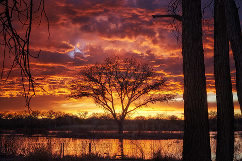 albuquerque newmexico riogrande sunset sundown sun river tree