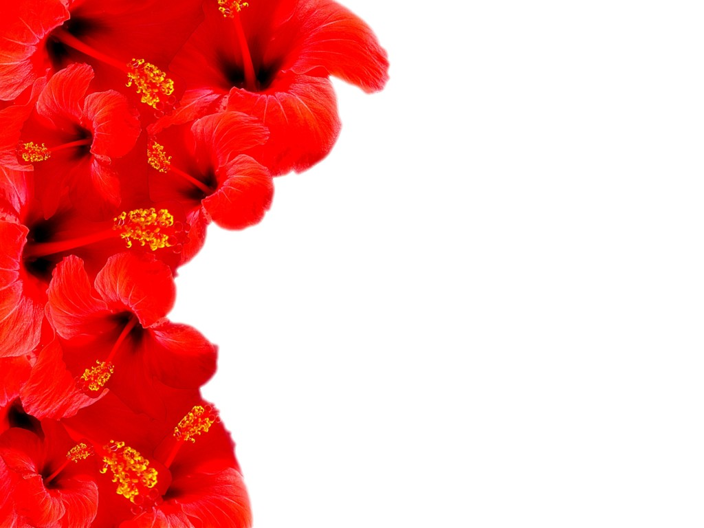 Red Floral Border Backgrounds Wallpapers Taylor Rose Flickr