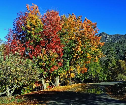 fallleaves usa fall leaves landscapes fallcolors foliage oakglenca dgrahamphoto