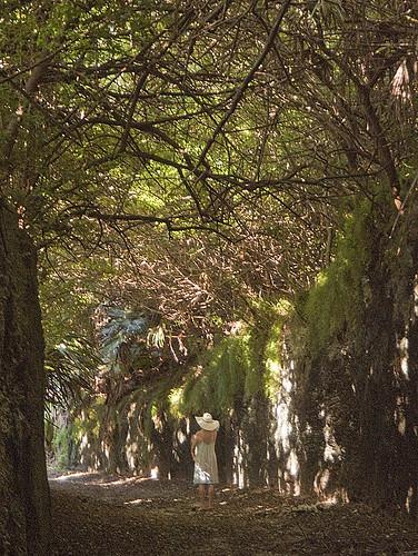 sunlight art photo topf50 track jonathan path railway charles foliage trail cutting bermuda smiths