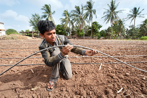 Use of drip irrigation in India