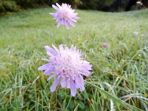 Vaduz - bloem