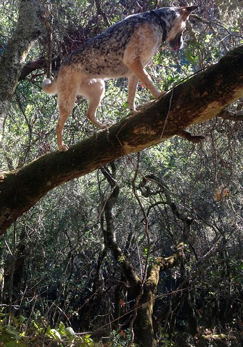 Heidi in a Tree | by serialplantfetishist