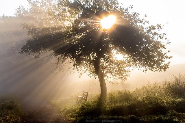 The Morning Bench IX B