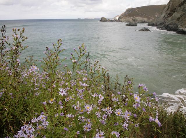 Clifftop Nature