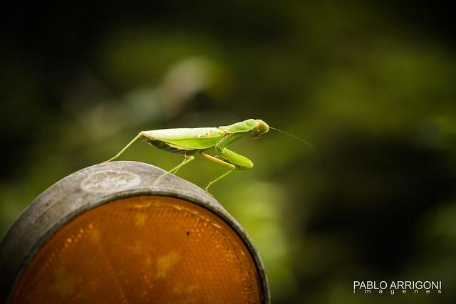 Mantis on the light