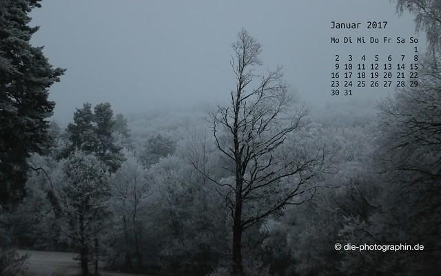 Winterbäume im Rabengrund in Wiesbaden