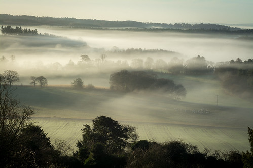 landscape winter mist misty frost valley surrey newlandscorner morning sheep fields