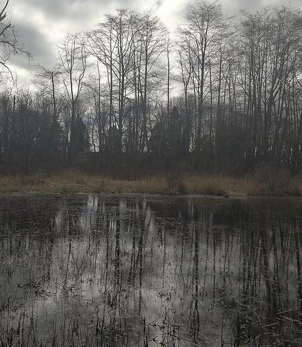 reflectionstreeswinterlightdarkbccanadanaturelandscape