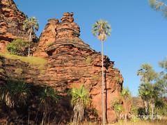 Desert Palms