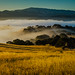 Above the Morning Fog in Salinas by Fluid Light Images