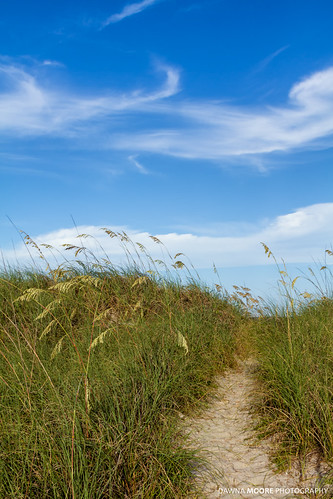 sea summer seascape beach nature grass vertical clouds landscape outdoors photography coast daylight sand day peace unitedstates florida dune relaxing peaceful bluesky coastal serenity coastline serene relaxation atlanticocean cloudscape fernandinabeach wispy seaoats northflorida flowersplants ameliaisland sunshinestate nassaucounty northeastflorida uniolapaniculata floridasfirstcoast